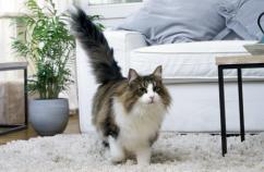 Tips rutina gato 1