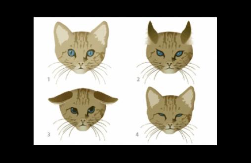 El lenguaje corporal y gestual de los gatos-2
