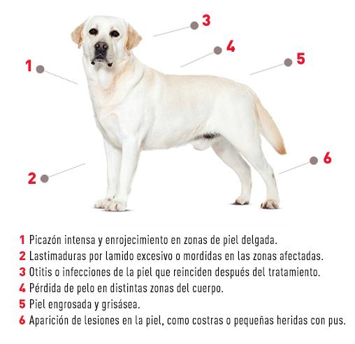 La llegada de la primavera: alergias en las mascotas-3