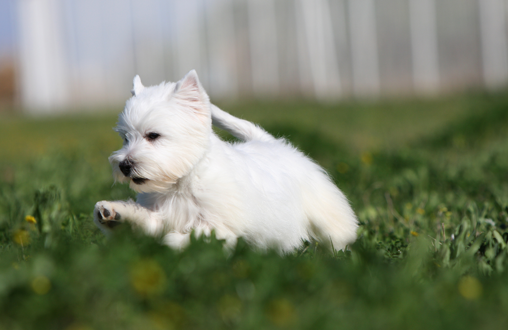 La llegada de la primavera: alergias en las mascotas