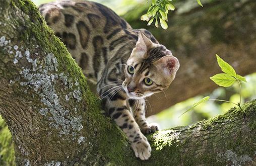 Tips para proteger a tu gato durante el verano