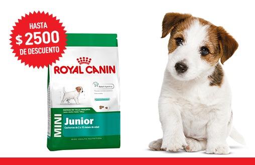 Imagen promoción Mini Junior