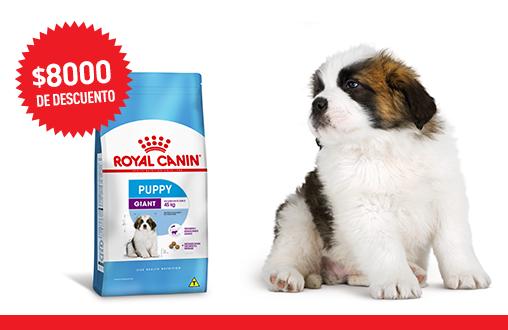 Imagen promoción Giant Puppy