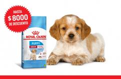 Imagen promoción Medium Puppy