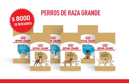 Imagen promoción Perros de raza grande