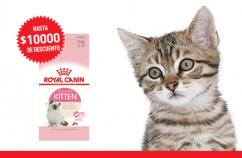 Imagen promoción Kitten