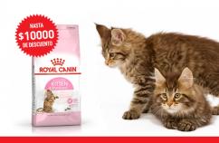 Imagen promoción Kitten Sterilised