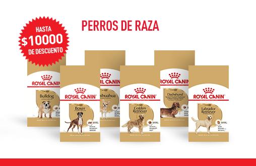 Imagen promoción Perros de raza