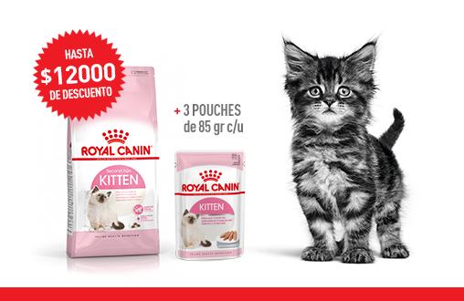 Imagen promoción Kitten + Kitten Húmedo