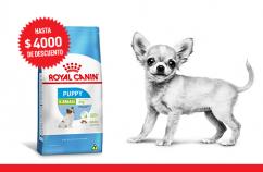 Imagen promoción X-Small Puppy