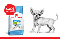 Imagen promoción Cachorros de talla miniatura