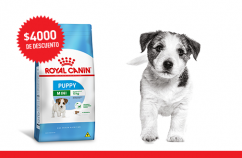 Imagen promoción Cachorros de talla pequeña