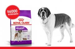 Imagen promoción Perros adultos de talla gigante