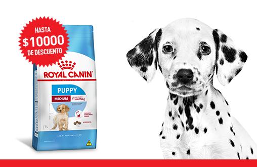 Imagen promoción Cachorros de talla mediana