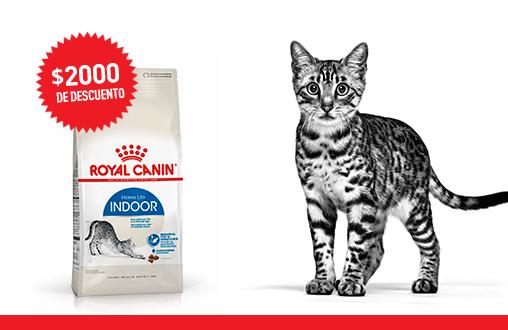 Imagen promoción Gatos de interior