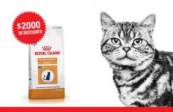 Imagen promoción Gatos maduros