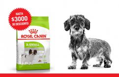 Imagen promoción Perros adultos de talla miniatura