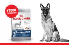 Imagen promoción Perros grandes con necesidades especiales