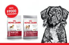 Imagen promoción Perros medianos con necesidades especiales