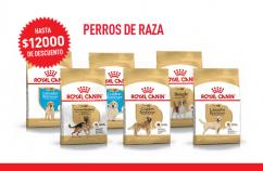 """Imagen promoción Perros de raza """"COPIA"""""""